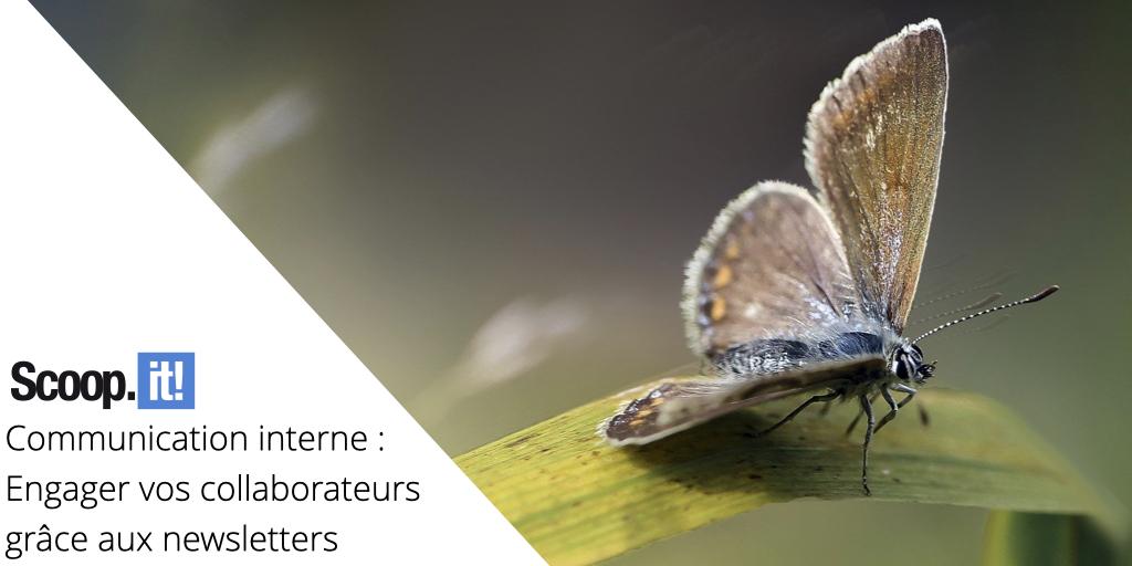 Communication interne : Engager vos collaborateurs grâce aux newsletters