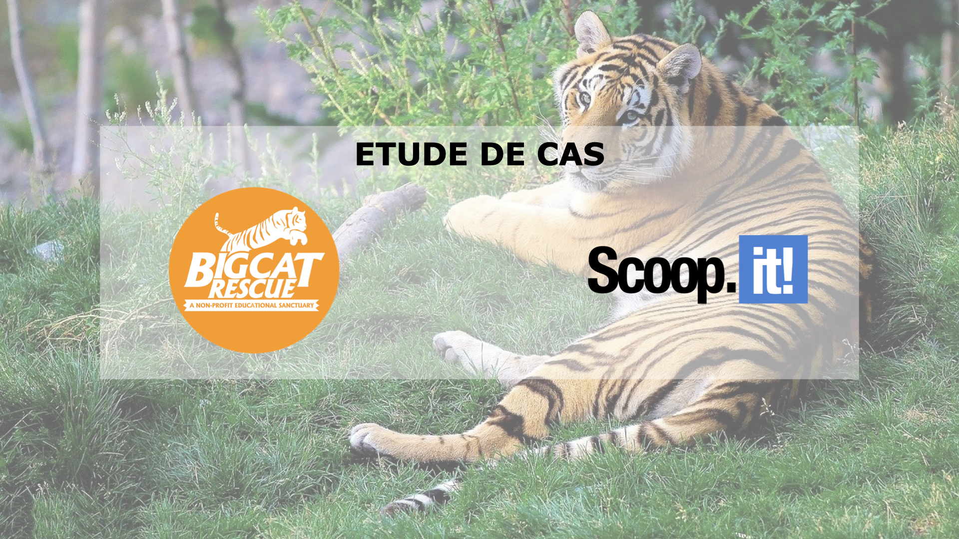 [Etude de cas] Big Cat Rescue & Scoop.it